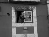 Piccione // Pigeon (Lisboa)