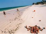 Commercio di conchiglie (volanti) // (flying ) Shells' trade (Jambiani, Zanzibar)