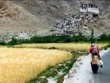 Ritorno dalla Spesa // Back from shopping (Chemrey, Jammu e Kashmir)